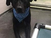 Tanker's story Hi I'm Tanker. I was found and brought