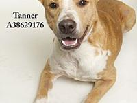 Tanner's story All dogs in the adoption program are