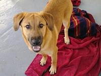 My story Tansy is a 6 month old mixed breed female