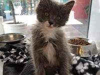 Taquito's story I'm a playful kitten looking for the