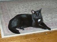 Tara's story Tara is a black DSH spayed female cat who