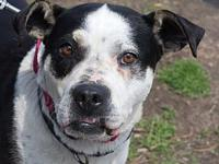 Tara's story Tara is a 6-year-old mixed-breed female