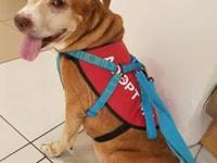 Tara's story !!! AVAILABLE for Adoption at ACCT