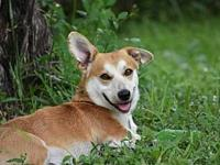 Tarly's story *Tarly requires a home with a fully,