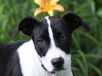 Tasha's story This puppy is in Tennessee. Adoption