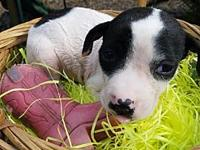 Tate's story Hi, I'm Tate! I'm a little pup who is
