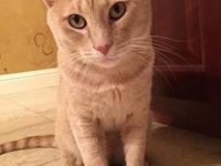 Tate's story Tater is a handsome, two-year old,