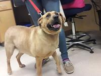 Taters's story Taters is a tan female Retriever,
