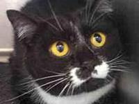 Tawny's story This Sweet girl was surrendered by her