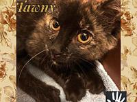 Tawny's story More info coming soon! For now we can