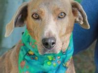 Tawny's story To be considered for adopting a dog from