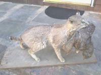 Bobcat is in very good condition. Excellent gift idea
