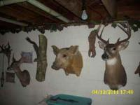 WHITETAIL SHOULDER MOUNTS $300&UP FISH SKIN MOUNTS