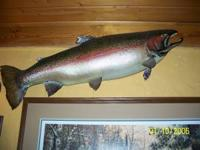 taxidermy trout 30 some inches long $170 obo . call bob