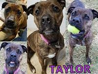 Taylor's story Taylor is a loving dog who would love a