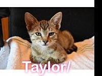 Taylor's story Visit this organization's web site to