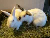 Tayton and Teagen are a bonded pair that were rescued