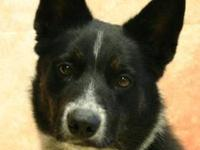 Taz's story Herding breeds are highly intelligent. I