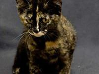 Taz's story Adoption fee for cats is $65.00 which