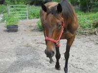 Jeeps is a 16+ h mare. She has been started under