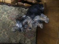 I have a really small female yorkie was born 10/02/2014