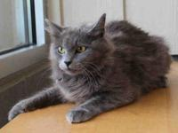 Teacake is a reserved cat who needs a loving new home.
