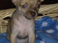 We have two little boys left ACA registered teacup