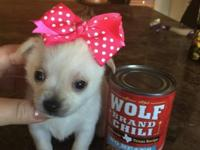 These adorable, tiny babies are UTD on shots and ready