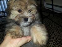 I have 2 children left pomeranian combine with shihtzu