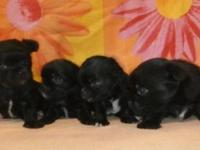 . These tiny little puppies are simply also precious!