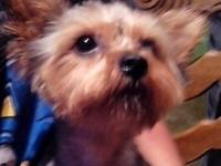 I have a 10 month old male teacup yorkie. His name is