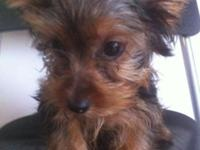 I HAVE A 4 MONTH YORKIE HE COME WITH CAGE FOOD DOG