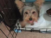 I have a teacup yorkie for sale he's nine months old.