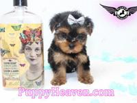 Visit our website www.PuppyHeaven.com now to see