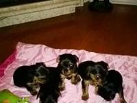 Going fast we only have 2 males left. Ready for homes