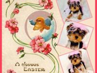Call us anytime . Black & & Tan CKC Yorkie women