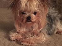 I have a 3.5 year old teacup yorkie she weighs about