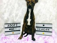 Teagan's story You can fill out an adoption application