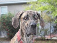 Meet Teague! Teague is a 2-3 yr old male ( his foster