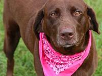 Teal's story Name: Teal Breed: Labrador Retriever