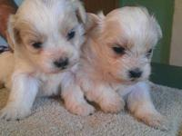 Sugar and Jay Bird have six beautiful pups. Two white