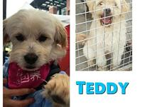 Teddy's story Teddy is a very sweet dog who loves to be
