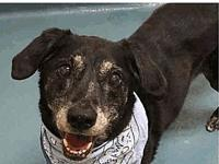TEDDY's story TEDDY IS A SENIOR WHO WAS DUMPED IN A