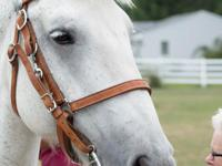 Teddy Mack von Thunderpants is a gray gelding in his