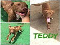 TEDDY's story 06-21-18 Sweet and playful puppy. Already
