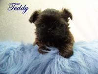 Teddy is from Monkey & Zac's litter born on 7/8/15, so