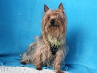 Teddy was picked up as a stray dog in San Gabriel. He