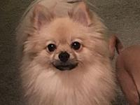 My story Teddy is an 3 year old Pomeranian He weighs 8