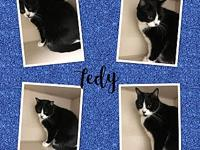 TEDY's story TEDY IS 7 YEARS OLD, FRONT DECLAWED,