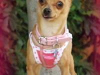Teeka is a 1-1/2 year old, 5 lb. sweet girl. This cutie